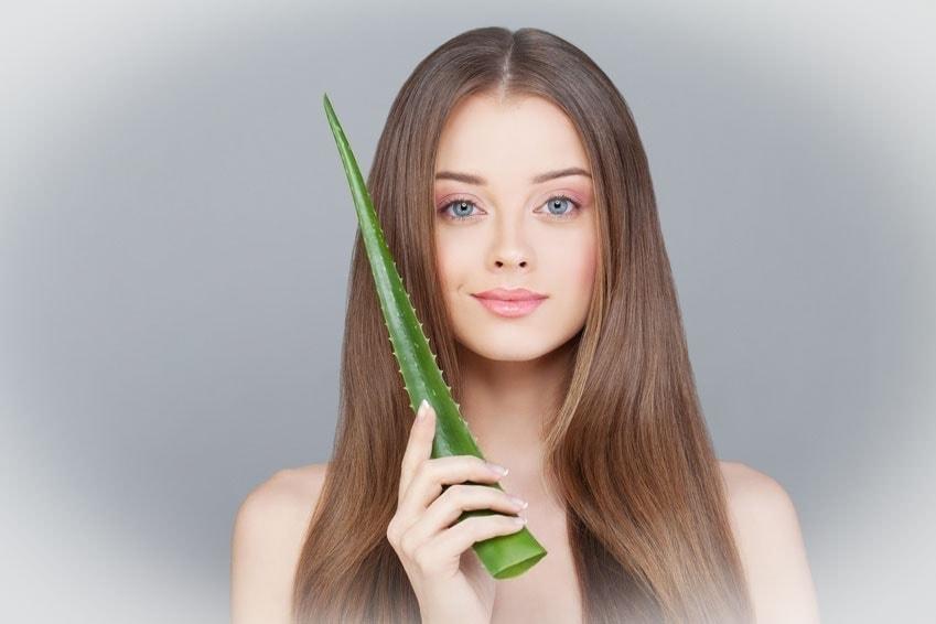 L'Aloe vera, source de santé Laboratoire Bioligo