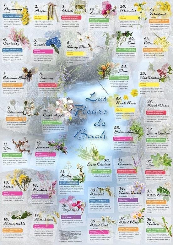 Les fleurs de Bach Laboratoires Bioligo