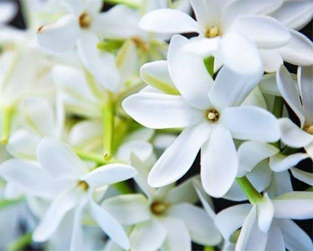 Fleurs de Tiaré Hei Poa Laboratoires Bioligo