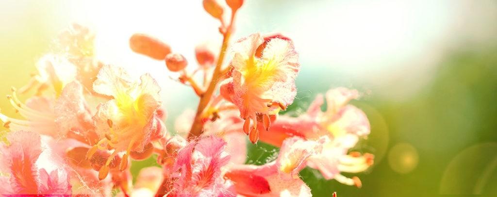 Red Chestnut Fleur de Bach Bio Laboratoires Bioligo